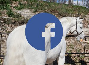 Facebook Ecurie de Chimères