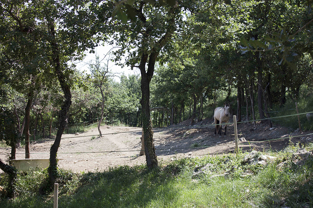 Paddock pension chevaux Gard