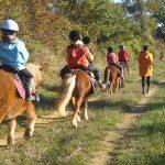Cours d'équitation à poney et shetland